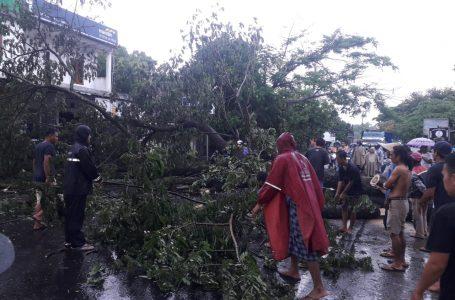 Pengendara Motor Tewas Tertimpa Pohon akibat Hujan Disertai Angin Kencang