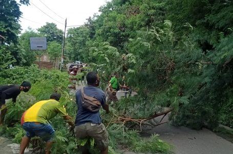 Berpotensi Bahaya, Pohon di Jalur Lintas Sumbawa-Raberas Ditebang