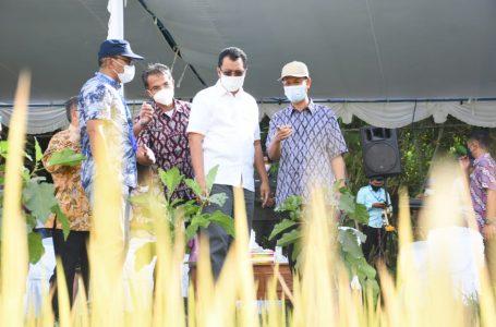 Tanam Padi Sistem SRI dan Jarwo Diharapkan Mampu Tingkatkan Produksi Petani